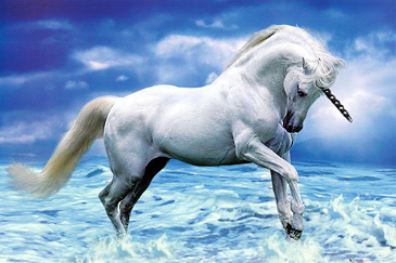 38 best images about Unicorn on Pinterest  An A unicorn and